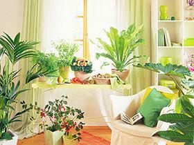 有氧阅读  10款书房植物摆放设计图